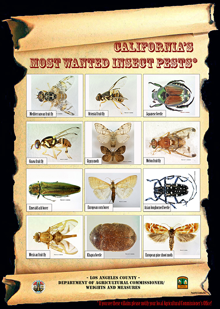 California's Most Wanted Insect Pests. Flyer with pictures of insects