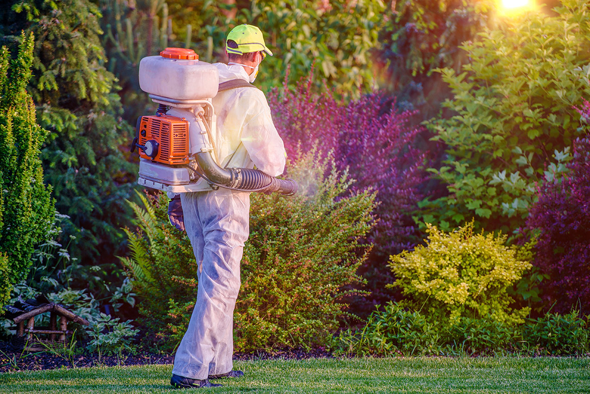 Man spraying plants and trees