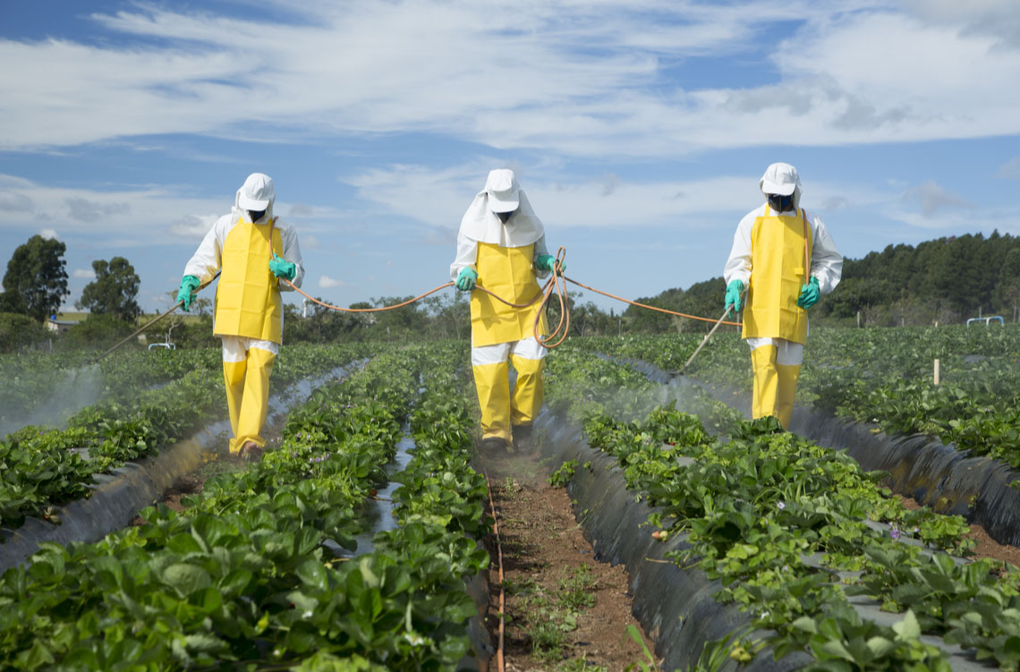 Farmers spraying a strawberry field