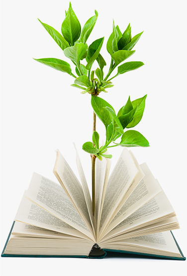 Plant growing out of a book