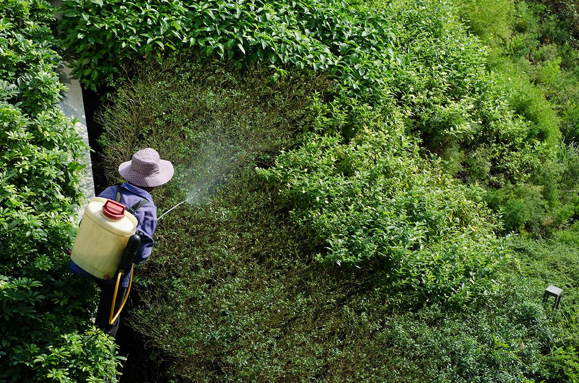 Man spraying foliage